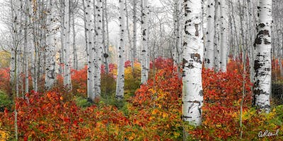 The Amazing Colors Of Leavenworth Photography Workshop Hosted By Aaron Reed
