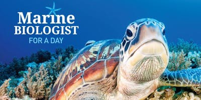 Marine Biologist for a Day - Thursday 17th January 2019 - CREEC