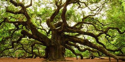 Tree of Life - Transformational Meditation