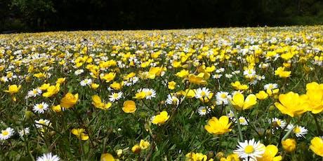 Wildflower Identification and Survey tickets