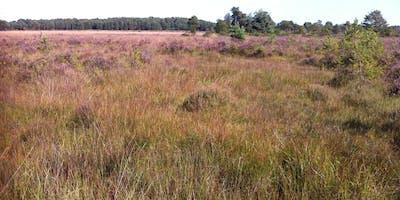 Heathland, Acid Grassland and Bogs - Botanical Survey and Assessment