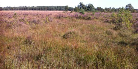 Heathland, Acid Grassland and Bogs - Vegetation Survey and Assessment tickets