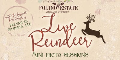 Live Reindeer Photo Sessions