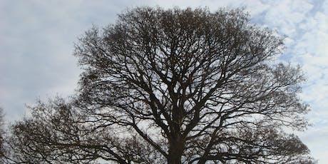 Winter Tree Identification tickets