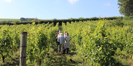 Sussex Vineyard Tour - Day exploring the vineyards of Sussex tickets