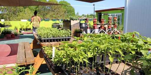 Get Involved at H St. Farms Rooftop Garden