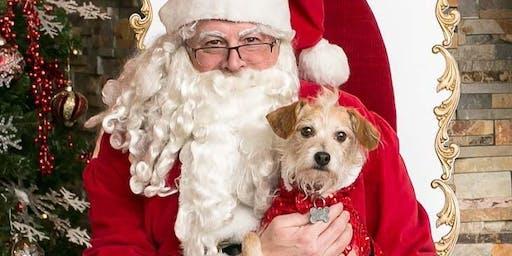 Pet Photos with Santa - Big Dogs
