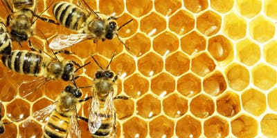 Sustainability Skills Workshop: Introduction to Beekeeping