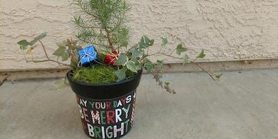 Mini Pine Tree planting