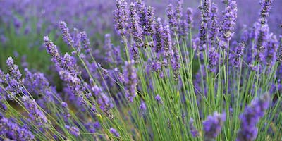 The Magic of Essential Oils Free Workshop at Farmer & Sun Cafe