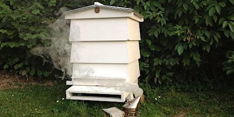 Beekeeping Taster Day tickets