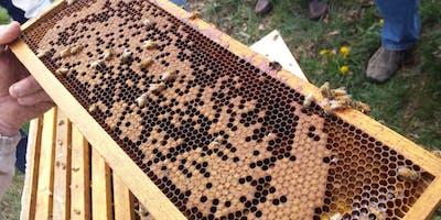 Beekeeping Workshop: Package Installation