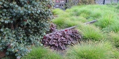 Copy of Film - Five Seasons-the Gardens of Piet Oudolf