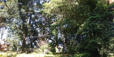 Lambert Road Reserve Bushcare Group Meeting