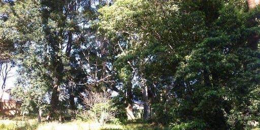 Lambert Road Reserve Bushcare Group Meeting