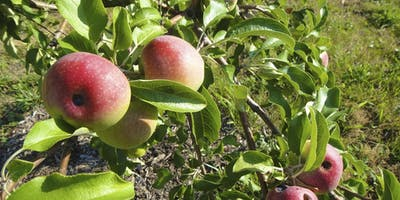 Orchard Pest and Disease Management