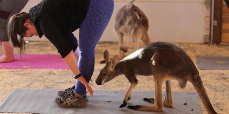 Yoga with Kangaroos tickets
