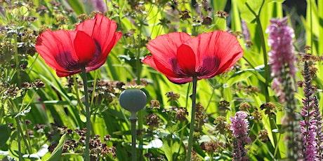 Planning Garden Borders  at Westonbirt Arboretum tickets