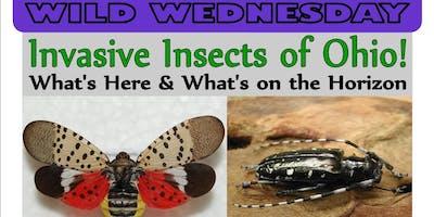 Wild Wednesday - Invasive Insects of Ohio