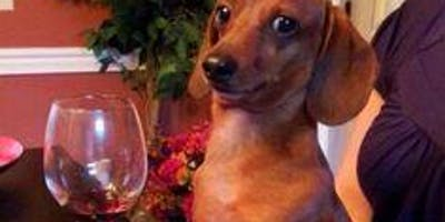 Eiryns Dog and Wine party