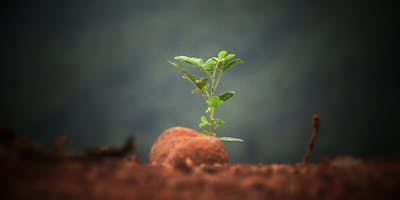 Planting New Congregations