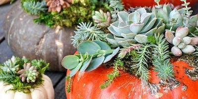 Pumpkin + Succulent Workshop
