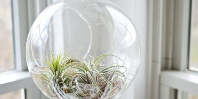 Holiday Terrarium Workshop
