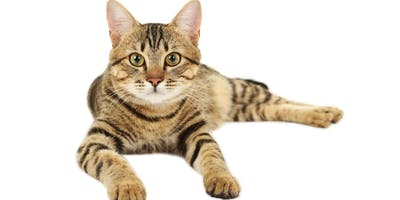 The 2019 ISFM Feline Symposium for Vets and Veterinary Nurses