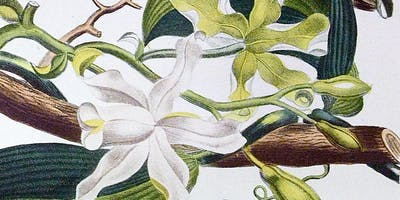 Vanilla: An Ethnobotanical Journey from Central America