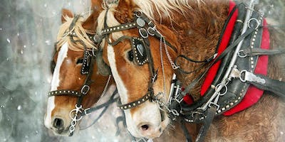 Horse Drawn Carriage Christmas Tour Of Lights