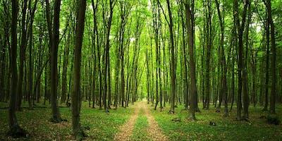 La dynamique spirituelle de la forêt, conférence de Claude Lefebvre