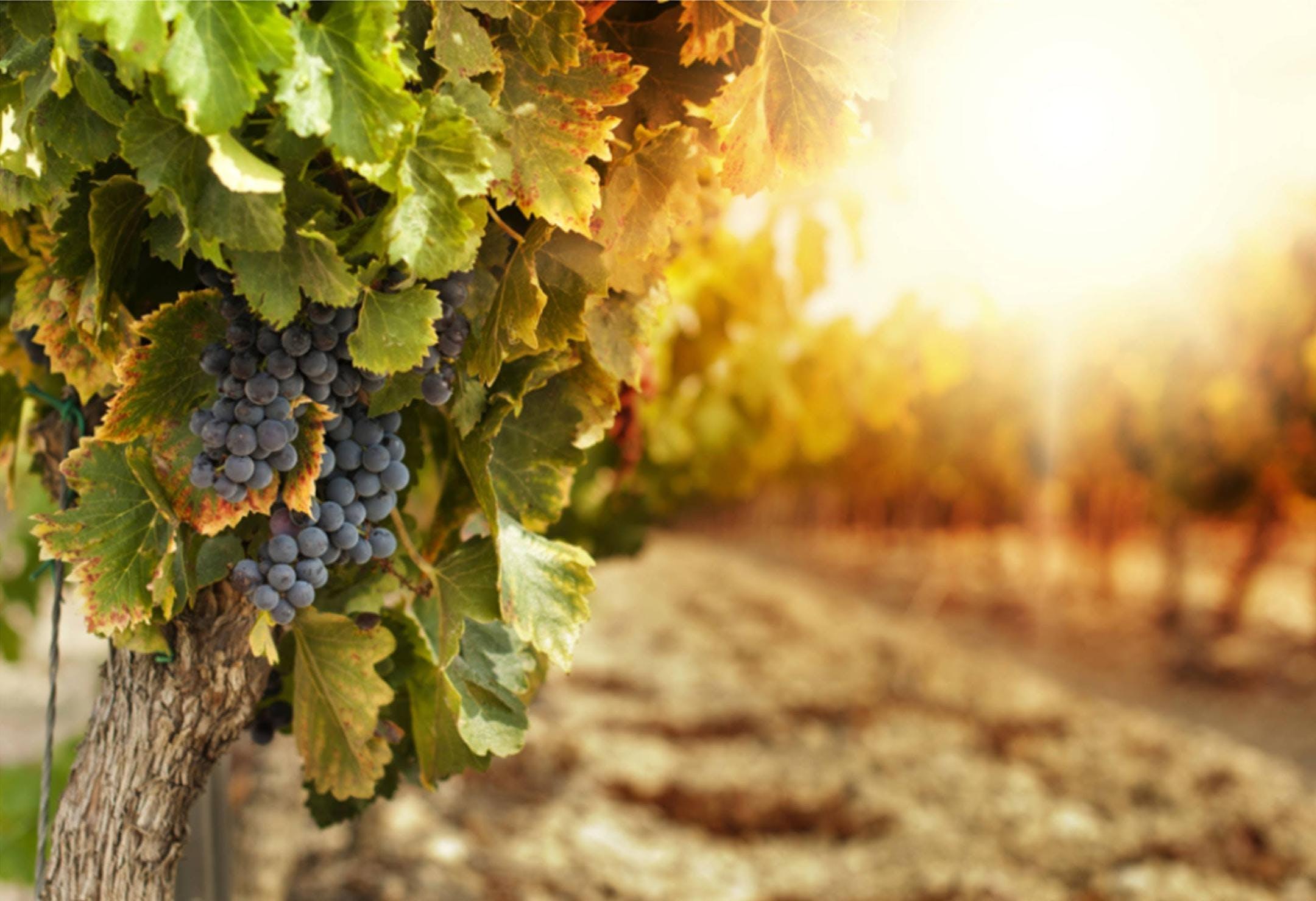 Terroir - die Seele des Weins