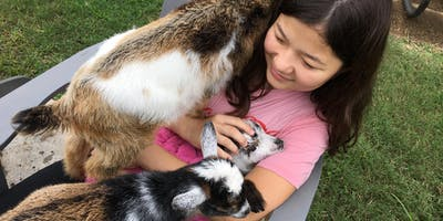 Baby Goat Snuggle Hour - 4:00 to 5:00 PM   ONLY 8 Spots!!!