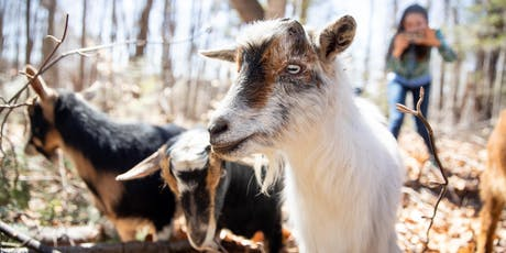 Wild Walk With Goats aka Hike With The Herd! tickets
