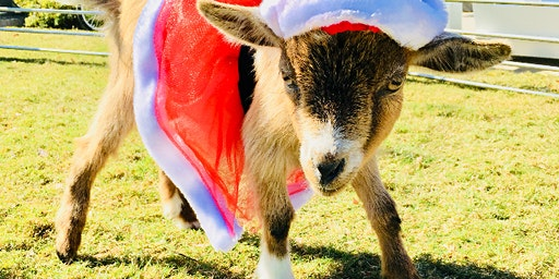 Holiday GOAT YOGA! With Coffee & Cocoa!