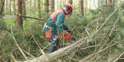 Chainsaw Maintenance and Crosscutting, Safe Felling of Trees