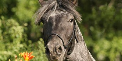 Equine Assisted Constellations:  Playing in the Knowing Field with Horses