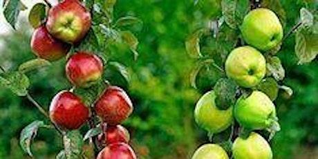 Fruit Tree Grafting tickets