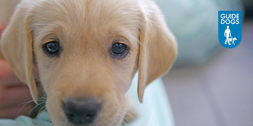 Guide Dogs Puppy Helper Experience