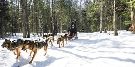 Dog Sledding and Snow Tubing tickets