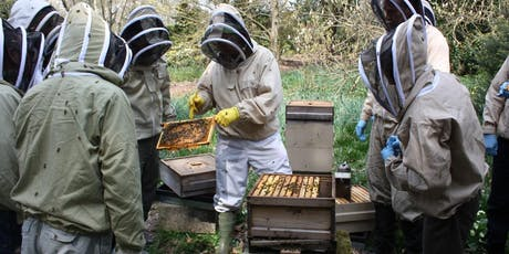 Introduction to beekeeping tickets