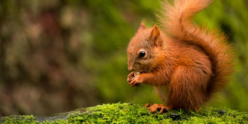 Photography Experiences - Red Squirrels (2019) - 3 Hours