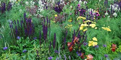 Creating a Wildlife Friendly Garden
