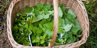 Wild Edibles! Identification and Foraging - May 2019