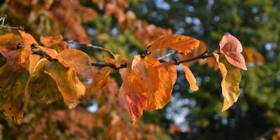 Bijzondere bomen en hun zaden