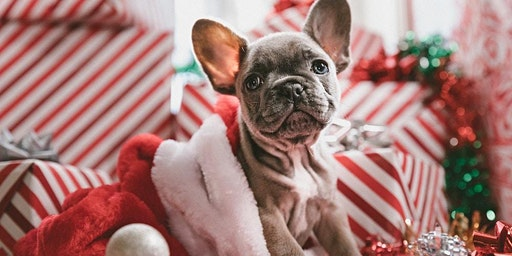 Pet Photo Night with Santa