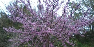 Lunch & Learn: Selecting & Caring for Trees in the Landscape