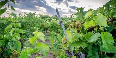 Vineyard Pruning 101 - Start your own Vineyard