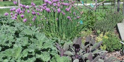 Herb Gardening for Utah
