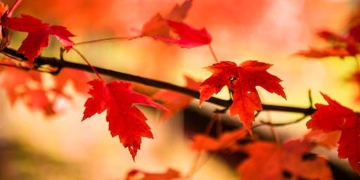Falls & Foliage of Southern NH